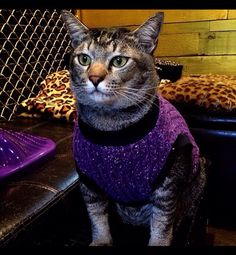 Cat wearing a purple Sweaters Cat Sweaters, Purple Sweater, Cats, Photos, How To Wear, Animals, Gatos, Animales, Kitty Cats