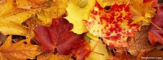 Autumn leaves Facebook Cover photo