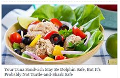 Your canned tuna has a dirty secret    It might be dolphin safe But, is your tuna  turtle or shark safe?  http://www.takepart.com/article/2015/03/09/canned-tuna-buying-guide-ranking-sustainable-ethical-fishery-greenpeace