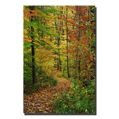 Trademark Fine Art Fall Trail by Kurt Shaffer Canvas Wall Art 20x30Inch ** For more information, visit image link. (This is an affiliate link)