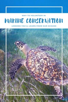 Volunteering in Marine Conservation is a popular choice for those who want to support nature through volunteer efforts. Here are some of the important lessons you'll learn if you choose to save the oceans on your volunteer experience. | Volunteer Abroad, Marine Conservations, Sea Turtles, Volunteering