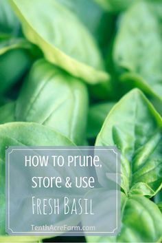 Whether you're growing basil to make pesto or for other culinary uses, the question that always comes up is how to store fresh basil. Here's what you need to know to prune, store, and use fresh basil in the kitchen.