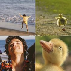 Zayn Malik, Niall Horan, Liam Payne, Louis Tomlinson, Bird, Animals, Instagram, Stiles, Harry Styles Photos