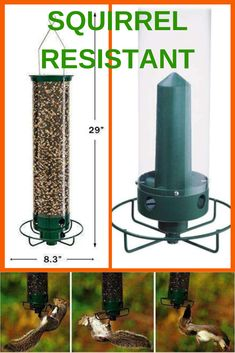 Hanging tube bird feeder with a spinning base when a squirrel lands on it. Squirrel Resistant Bird Feeders, Sunflower Kernels, Hanging Bird Feeders, Summer Loving, Squirrels, Bird Houses, Rats, Spinning