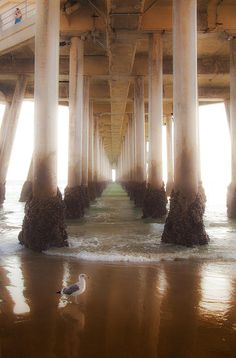 Seagull Under The Pier Ocean Beach Shoreline Waves fine art photography prints for the home decor or the office.   http://fineartamerica.com/featured/seagull-under-the-pier-jerry-cowart.html?newartwork=true