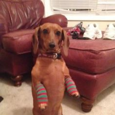 Leg Warmers LOL!!: Hey I have cold legs, this time of the year, try it you might like it.
