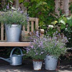 plantes en pot spécial sécheresse