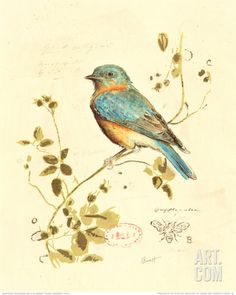 Gilded Songbird IV Print by Chad Barrett (Drawing inspiration from a century botanical plate) canvas painting abstract, photo canvas ideas, dream canvas Images Vintage, Art Vintage, Vintage Birds, Poster Vintage, Bluebird Vintage, Vintage Pictures, Vintage Floral, Bird Prints, Framed Art Prints