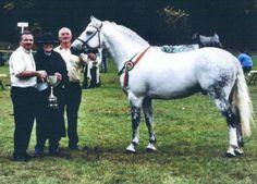Google Image Result for http://www.shelbournefarm.com/images/horses/TuliraRoebuck.jpg