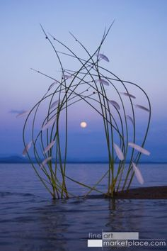 Reeds and Feathers Moon Gate by Sally J. Smith - Click Image to Close