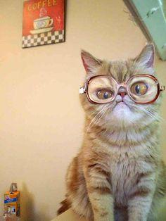 Solo un gato con anteojos