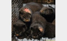 OMG! SO SAD! PLEASE SIGN & SHARE! THANK YOU! Petition · Ban Fur Farming in Greece · Change.org