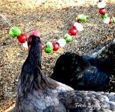 pecking radishes
