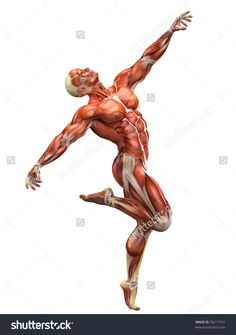 Image result for images anatomy dancing