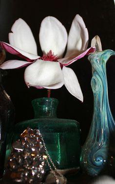 Magnolia & Colours at Midnight.