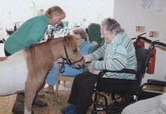 Mr P an American Minature horse makes a big impression visiting seniors at a care center in the UK.