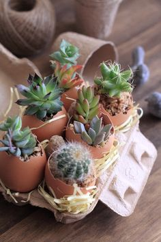 eggs and succulents