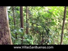 Short video of us building our private hiking trail in the protected region of our largest park in Las Villas de San Buenas #costarica #hiking #jungle