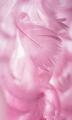 Scrapbook Background, Flower Background Wallpaper, Flower Phone Wallpaper, Flower Backgrounds, Photo Backgrounds, Galaxy Wallpaper, Wallpaper Backgrounds, Iphone Wallpaper, Pink Wallpaper Girly