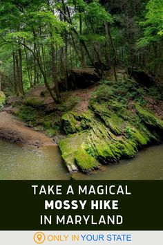 Take this magical, mossy, easy to moderate loop trail in Maryland. It's a beautiful hike that you'll want to end to your outdoor bucket list. Camping And Hiking, Backpacking, Places To Travel, Places To Go, Vacations In The Us, Away We Go, Old Cemeteries, Editing Background, Jungles