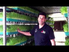 Growing Animal Fodder at 7 Hills Tallarook Farm Stay - Victoria Australia - YouTube