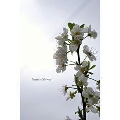 #beautiful #flowers #green #iphonesia #light #love #mothernature #nature #photooftheday #sun #sunset #TagsForLikes #tree #softness #colors #prospettiva #dettagli #natura #alwaysfollowback #followbackalways #followme #tagsta #instagram #photo #myphoto #scatti #spring #pugliaview #silhouette