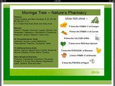 Moringa tree...Nature's Pharmacy