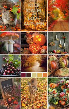 autumn scenes Lgende d'Automne ~ Legends of the Fall - Dans le Grenier de Pnlope Autumn Scenes: Autumn- Fall colors