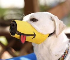 Smiling Dog Muzzle With Tongue Sticking Out