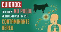 Los investigadores han descubierto que la bacteria resistente a los antibióticos también es transmitido por el aire, junto con agua contaminada y la carne. http://articulos.mercola.com/sitios/articulos/archivo/2015/04/28/bacteria-resistente-a-los-antibioticos.aspx