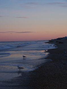 Seagulls & Sunset..Sandbridge Beach, Va