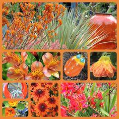 Orange is the New Black How to use orange flowers in the garden https://thegardendiaries.wordpress.com/2014/07/24/orange-is-the-new-black/