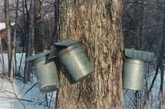 The Maple Syrup is flowing in Ontario which means it's time to visit a local Sugar Bush or Maple Syrup Festival Be sure to get out and enjoy some fresh air, Tapping Maple Trees, Sugar Bush, Landscape Quilts, Green Mountain, Travel Memories, Maple Syrup, Vermont, New England, Ontario