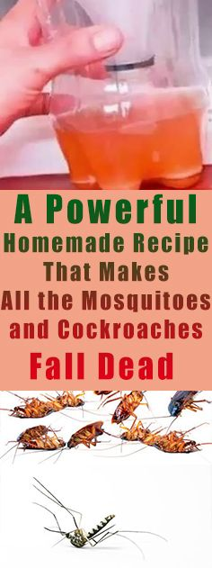 A Powerful Homemade Recipe That Makes All the Mosquitoes and Cockroaches Fall Dead #health #home #Fitness #diy