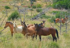 USA: I signed. Please take action to urge the National Park Service to humanely manage the wild horses within the Mesa Verde National Park