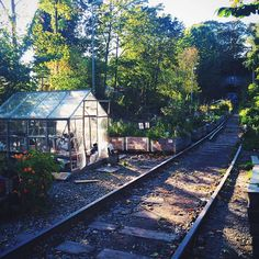 There is an awesome urban farming project very close to where we live, on Södermalm in Stockholm. Vegetables, flowers and herbs are grown along this abandoned train track. Great initiative!