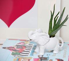 A Bubbly Life: Elephant Succulent Planter DIY