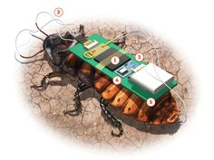 A tiny backpack turns a pest into a rescue robot
