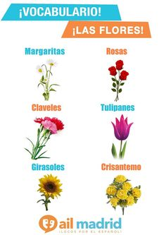 Spring has come yet and flowers are so important at this period! Learn their Spanish name.