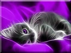 fantasy pictures of cats Purple Cat, Purple Love, Shades Of Purple, Purple Things, Purple Stuff, Fractal Images, Fractal Art, Free Android Wallpaper, Cute Cats