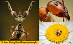 30 Award Winning Macro Photography examples and 10 Tips for Beginners.