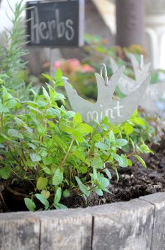Great herb markers