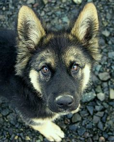 That look!  Wow! GSD