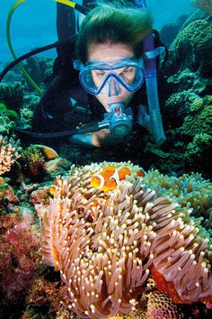 Diving in the Great Barrier Reef Clownfish. Image Courtesy of Tourism Queensland