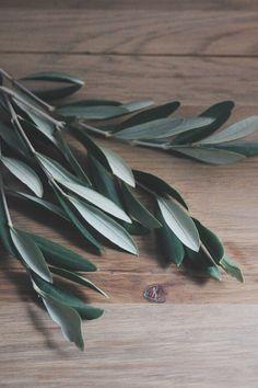 OLIVIER - Calendrier des fleurs - La mariée aux pieds nus
