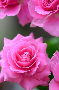 I absolutely loved living in this world of Flower Beauty...gonna be my second Rose to be loved...*Bjs..