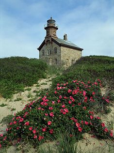 427-8 Rosa Rugosa and the North Light
