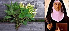 Pokrzywa - parząca młodość, zabija zarazki i pielęgnuje! Polish Recipes, Slow Food, Home Remedies, Mother Nature, Food Porn, Health Fitness, Herbs, Workout, Medicine Cabinet