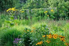 Van Nature - Planting Schemes and designs. All rights reserved - © 2014 Frank Heijligers photography
