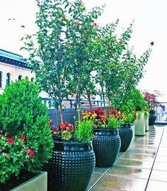 Rooftop Container Garden   Contemporary   Patio   New York   Amber Freda  Home U0026 Garden